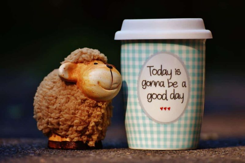 toy lamb with a small coffee cup