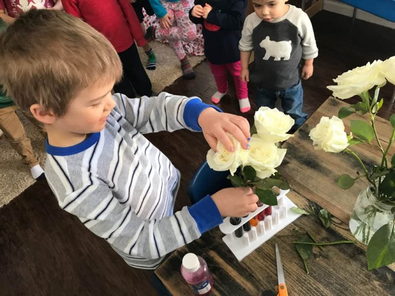 young boy putting white flower in vase