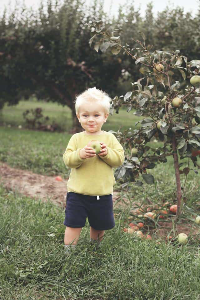 toddler eating apple in apple orchard learning about apples
